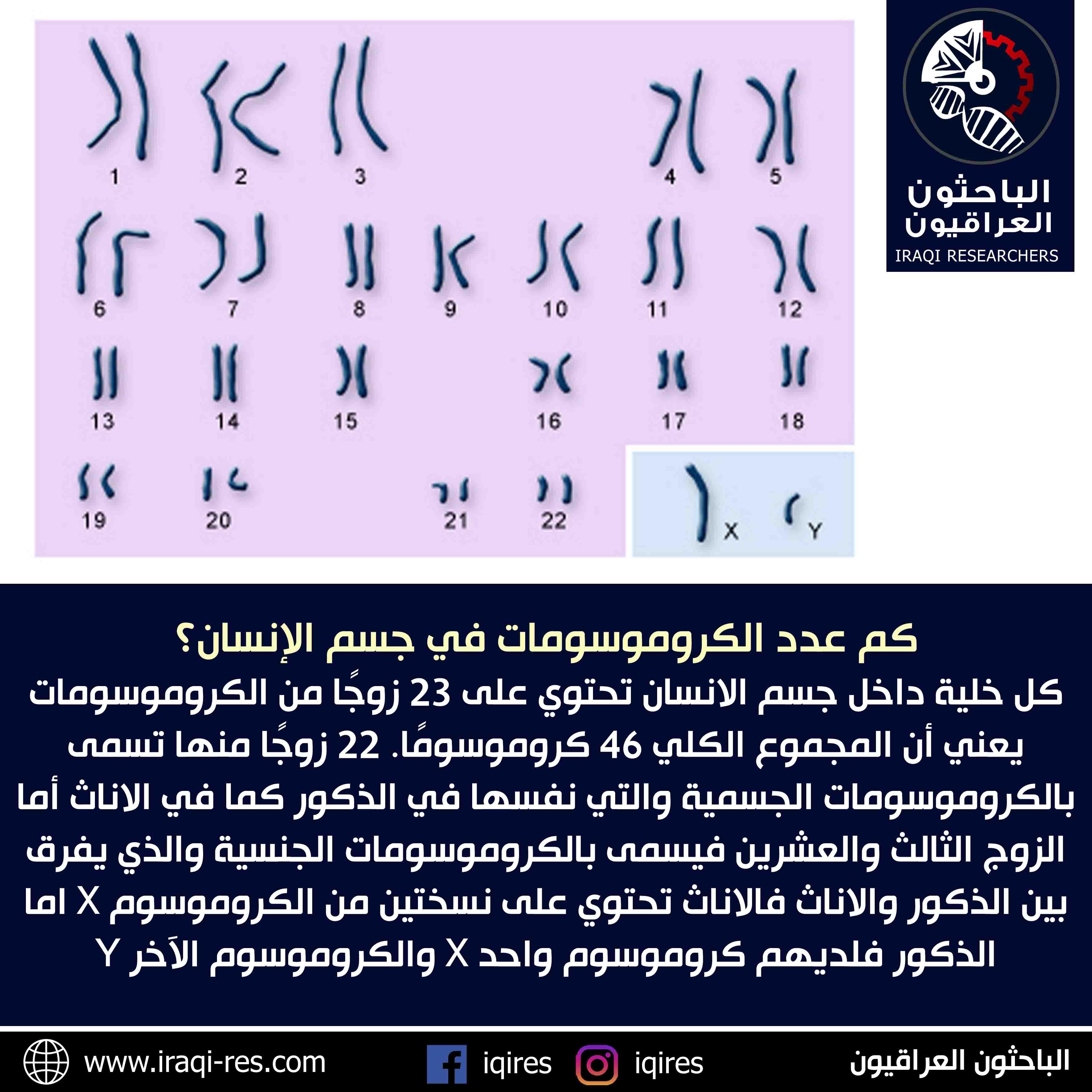كم عدد الكروموسومات في جسم الإنسان؟ | الباحثون العراقيون